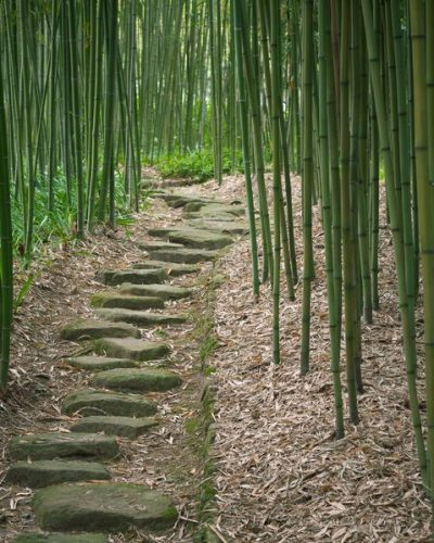 13826815 - bamboo forest trail